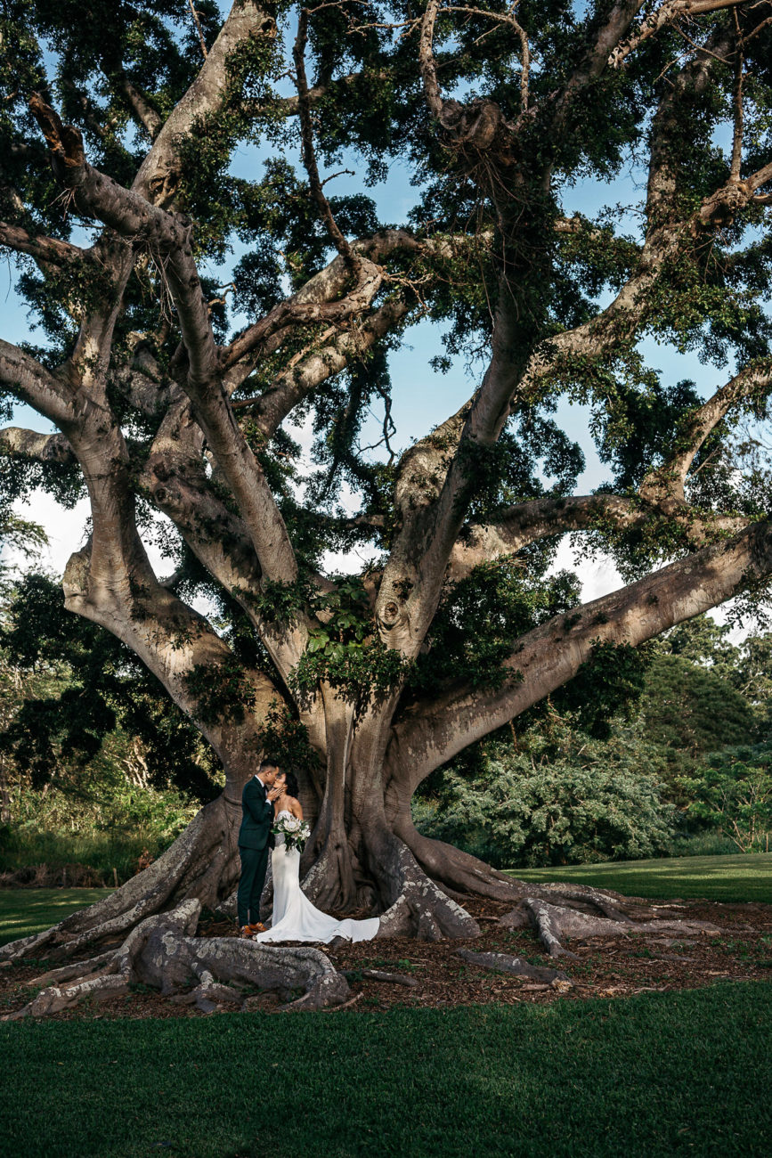 bridal couple under large banyan tree